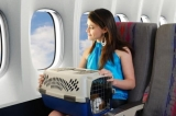 Los mejores transportines para perros